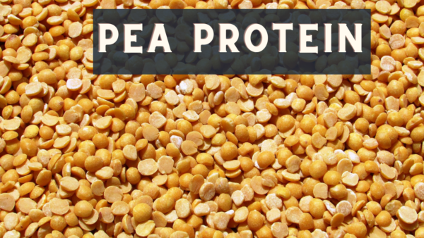 Why is Pea Protein Gaining Market Demand?